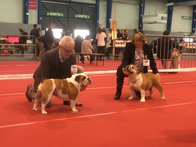 centrale canine toulouse